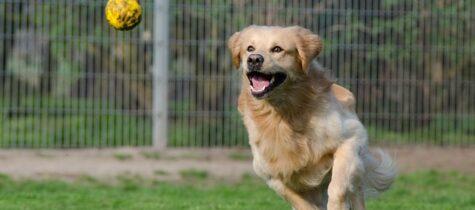 Rasta och lek med hunden i Täby Park