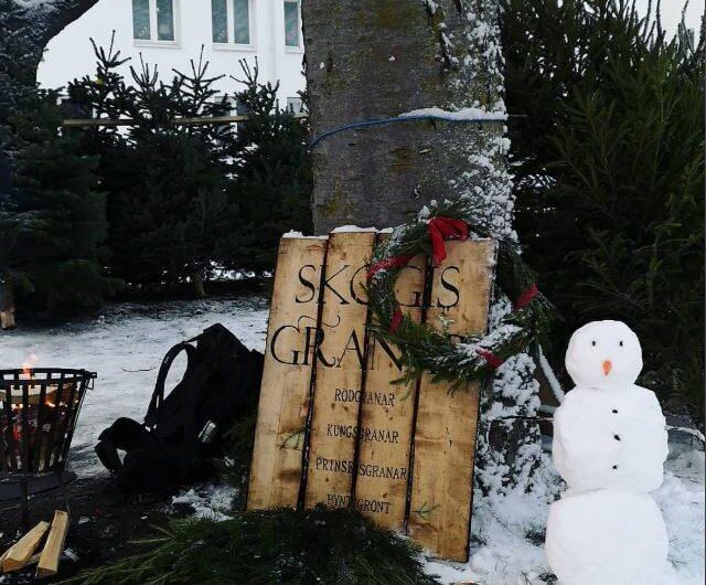 Köp julgran i Täby Park